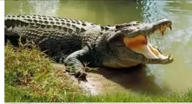 Scooper - Nigeria News: See The Tribe In Nigeria Where Crocodiles Are  Worshipped Like God